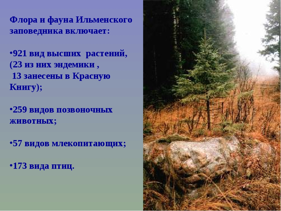 Флора и фауна Ильменского заповедника включает: 921 вид высших растений, (23...