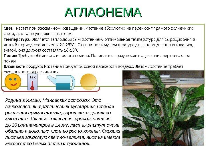 Картинки паспорт ухода за комнатными растениями