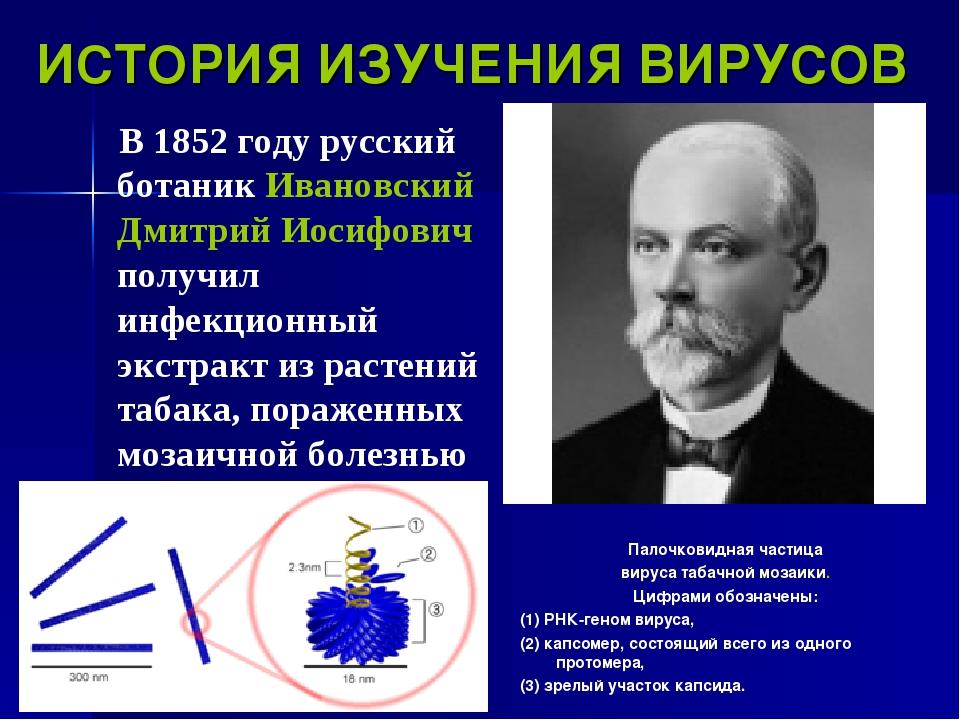 ИСТОРИЯ ИЗУЧЕНИЯ ВИРУСОВ В 1852 году русский ботаник Ивановский Дмитрий Иосиф...