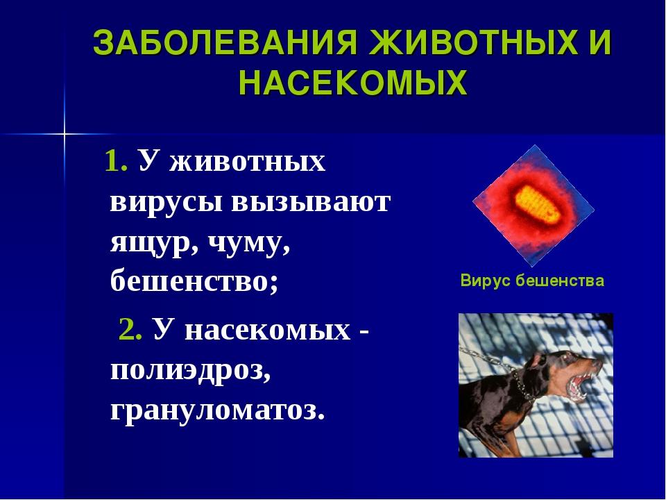 ЗАБОЛЕВАНИЯ ЖИВОТНЫХ И НАСЕКОМЫХ 1. У животных вирусы вызывают ящур, чуму, бе...