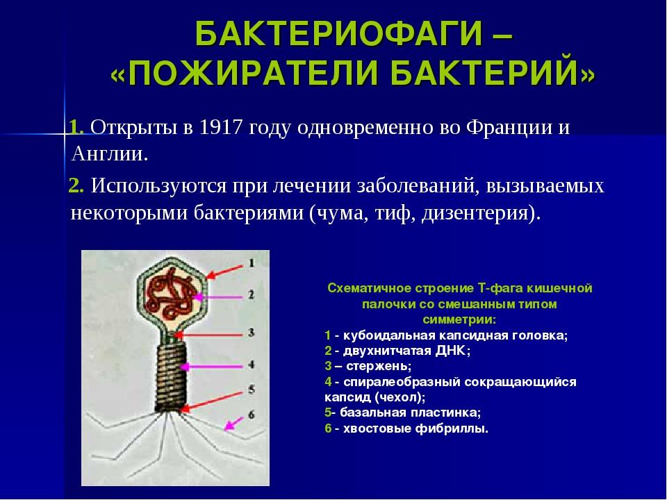 БАКТЕРИОФАГИ – «ПОЖИРАТЕЛИ БАКТЕРИЙ» 1. Открыты в 1917 году одновременно во Ф...