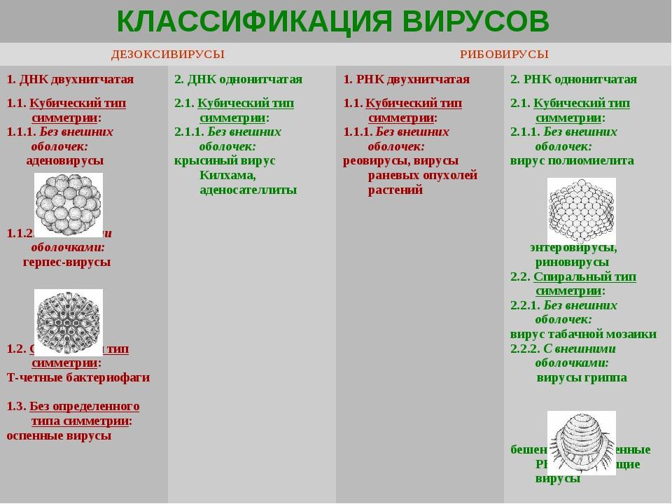 КЛАССИФИКАЦИЯ ВИРУСОВ  ДЕЗОКСИВИРУСЫРИБОВИРУСЫ 1. ДНК двухнитчатая 2. ДНК...