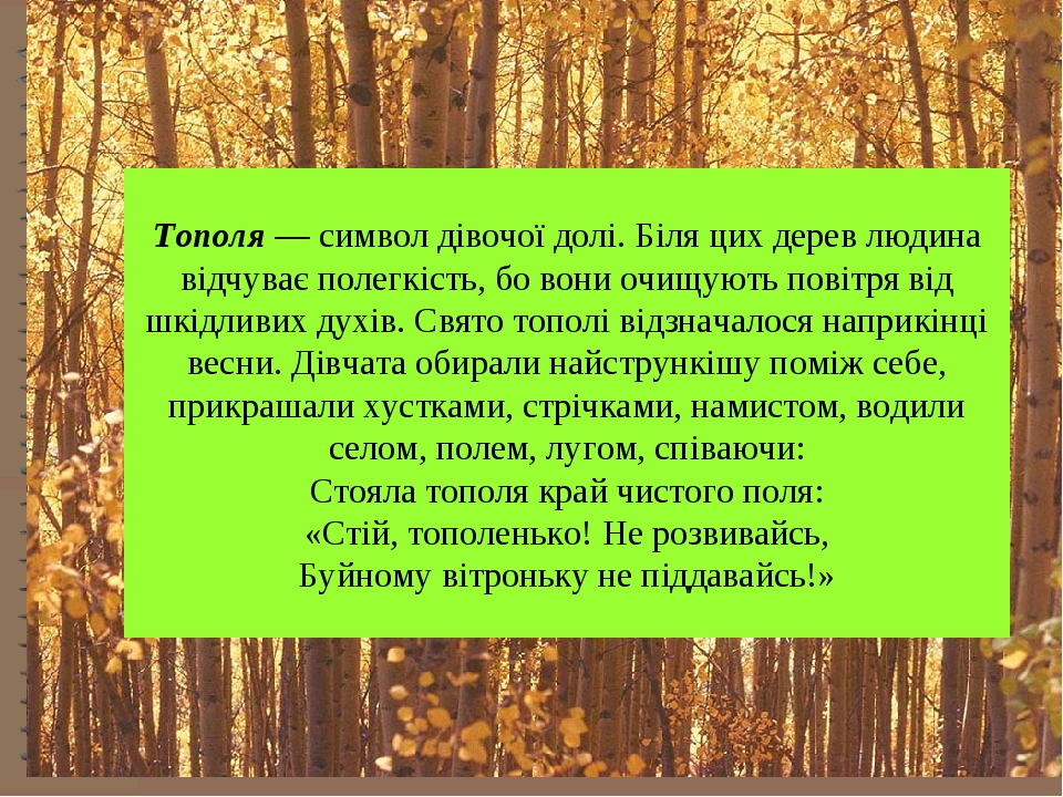 Тополя — символ дівочої долі. Біля цих дерев людина відчуває полегкість, бо в...