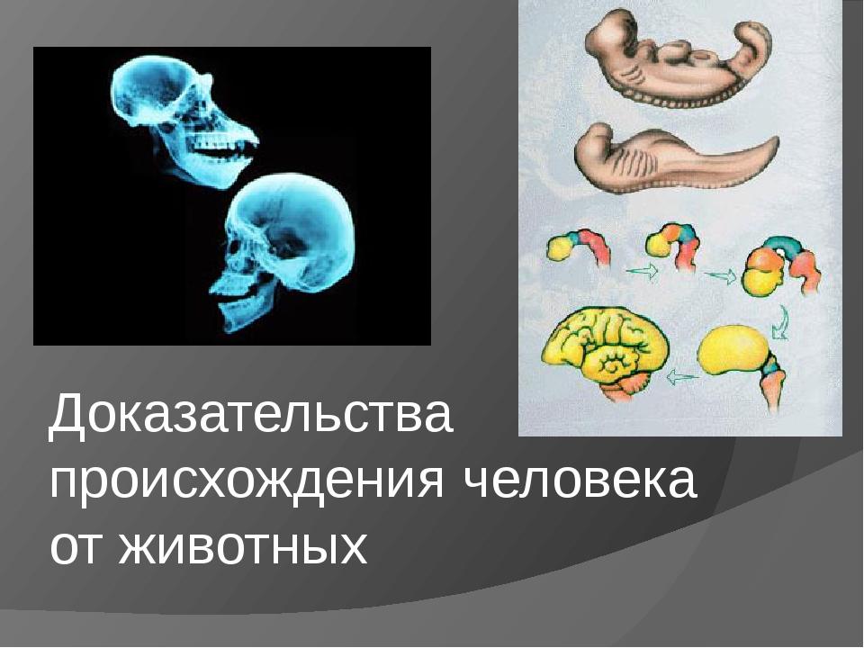 Доказательства происхождения человека от животных