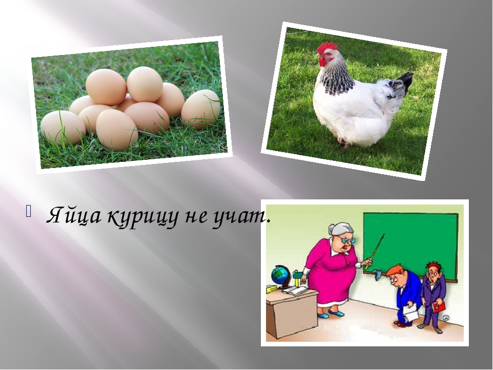 Яйца курицу не учат.