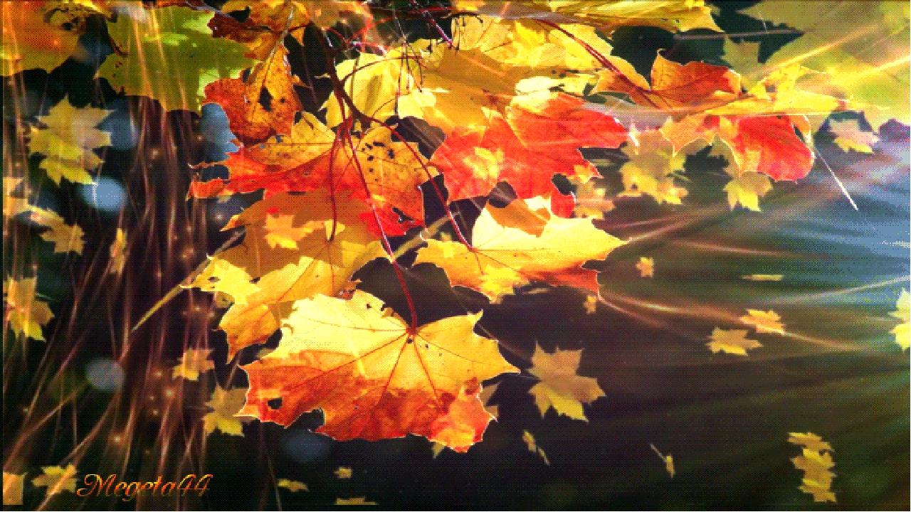 установили гифка осень дождь падают листья рейсеры современном мире