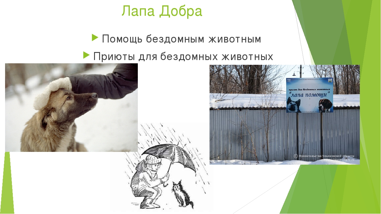 Лапа Добра Помощь бездомным животным Приюты для бездомных животных