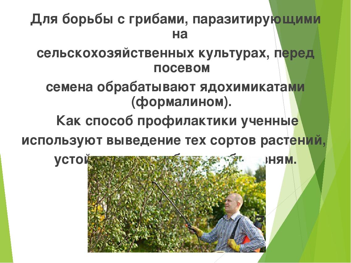 Для борьбы с грибами, паразитирующими на сельскохозяйственных культурах, пере...