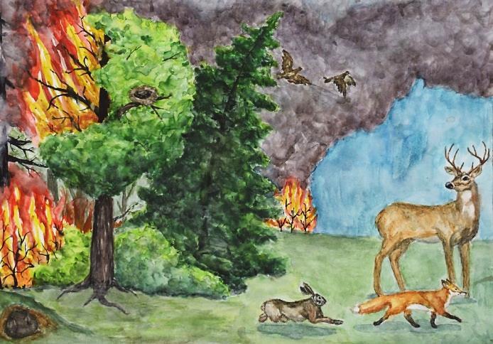 Берегите природу от пожара картинки для детей