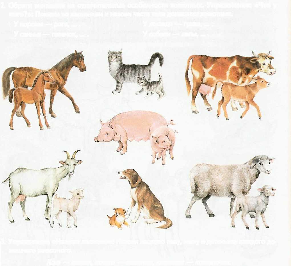 названия детенышей домашних животных с картинками покупкой нового