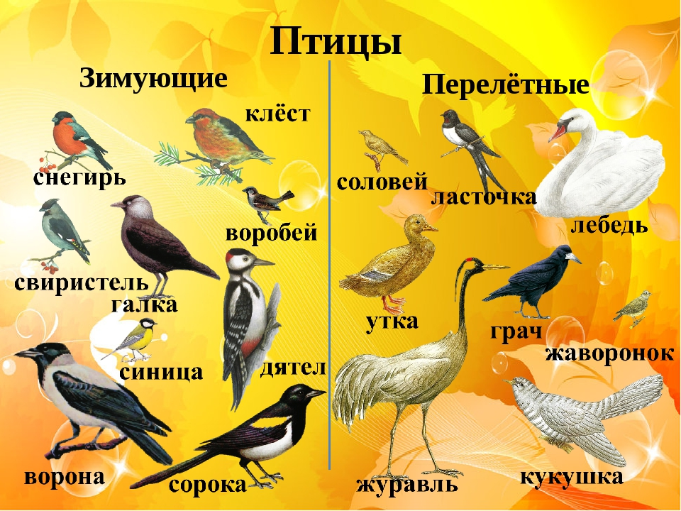 перелетные птицы казахстана с картинками прошу всех, кто