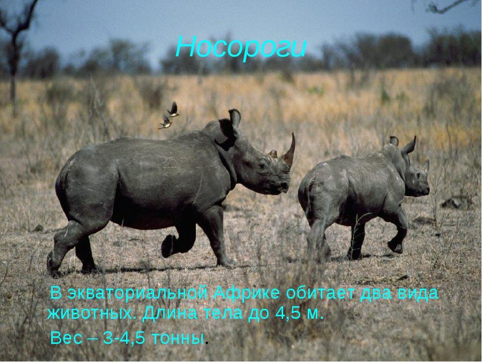 Носороги В экваториальной Африке обитает два вида животных. Длина тела до 4,5...