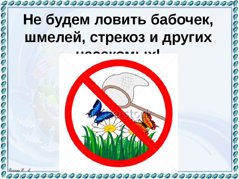 знак не ловить насекомых картинка завязать