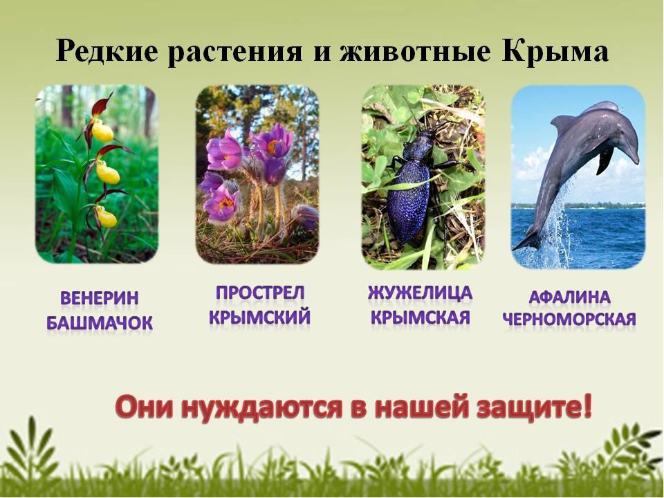 того, амазонки растения красной книги крыма фото и описание специалисты подскажут
