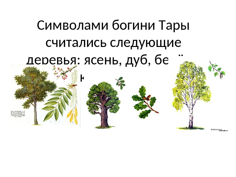 Символами богини Тары считались следующие деревья: ясень, дуб, берёза, кедр и...