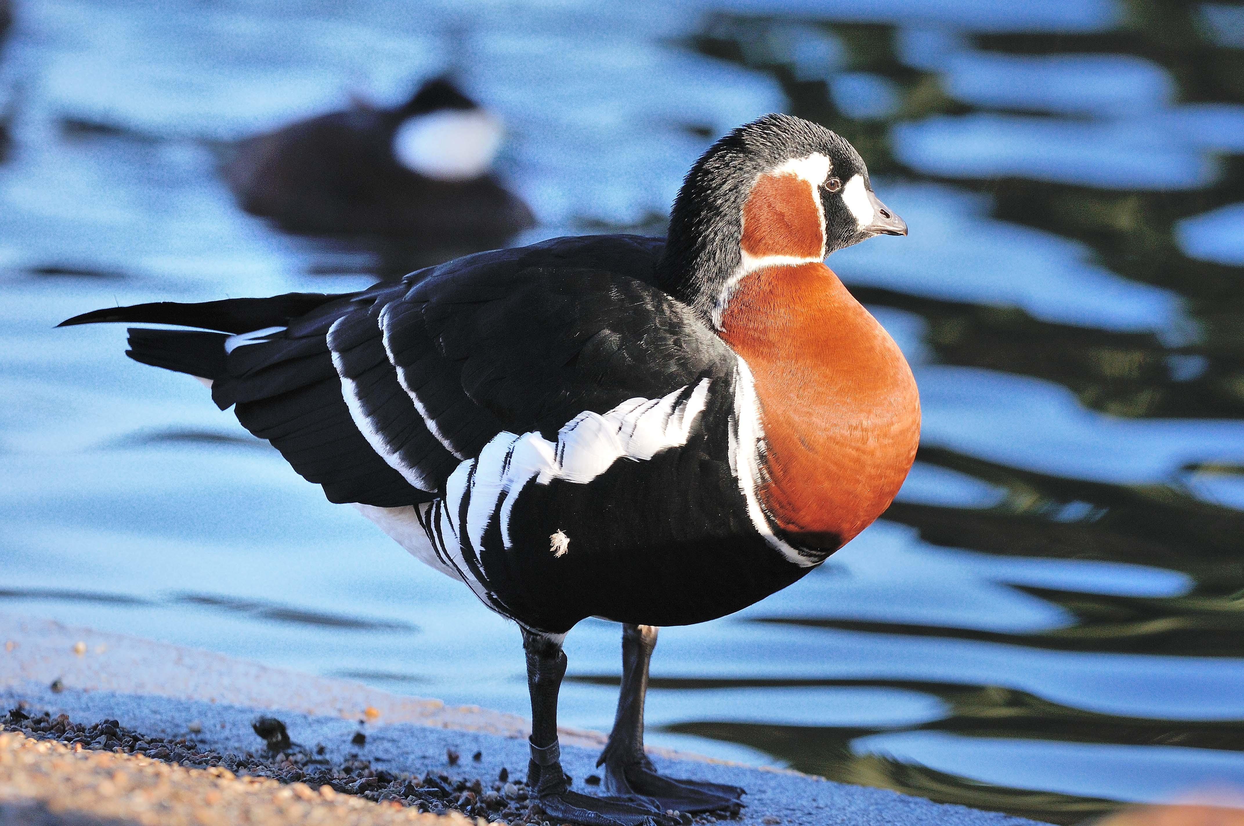 окончательным ярко-оранжевый животные и птицы красной книги россии фото выбор различных