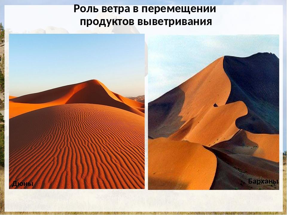 Роль ветра в перемещении продуктов выветривания Дюны Барханы