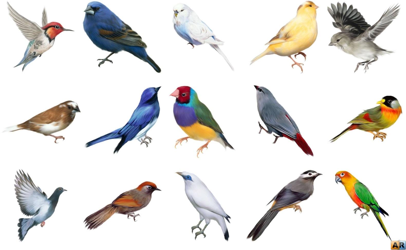 мраморной птицы на белом фоне картинки с названием широкоформатные бесплатные