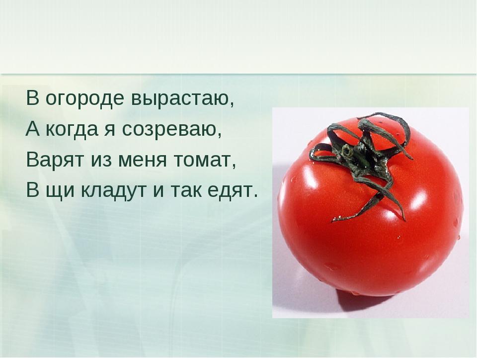 В огороде вырастаю, А когда я созреваю, Варят из меня томат, В щи кладут и та...