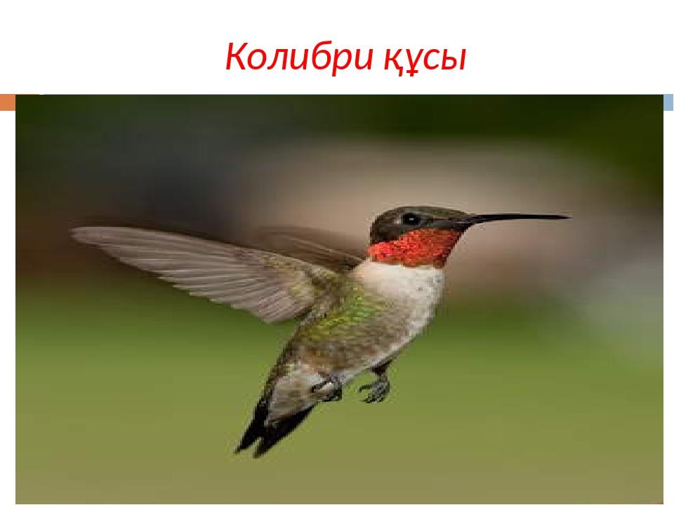 Колибри құсы