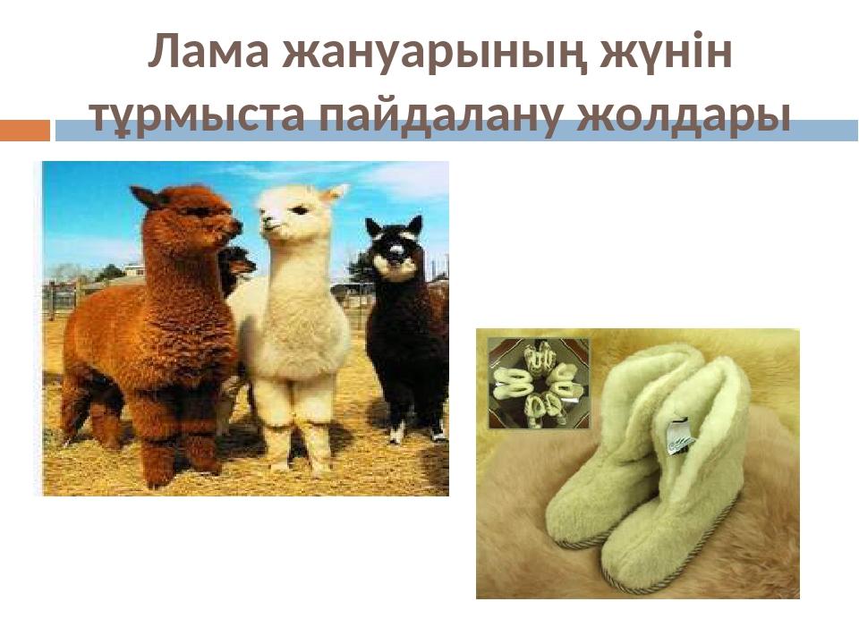 Лама жануарының жүнін тұрмыста пайдалану жолдары