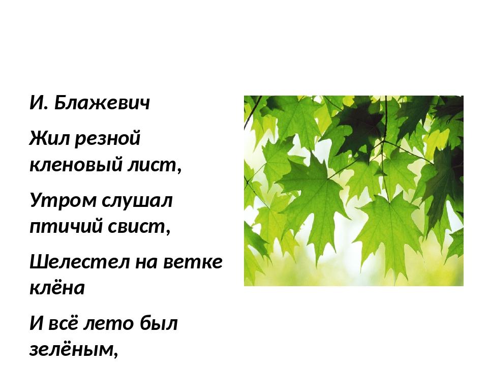 Кленовый лист И. Блажевич Жил резной кленовый лист, Утром слушал птичий свист...