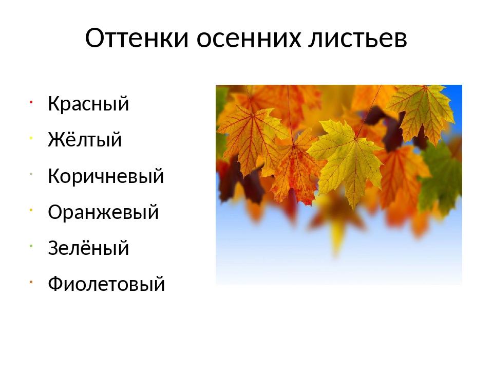 Оттенки осенних листьев Красный Жёлтый Коричневый Оранжевый Зелёный Фиолетовый