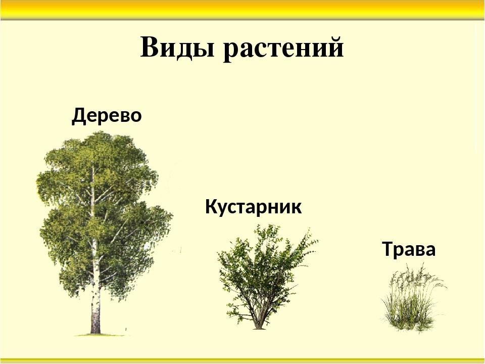 Картинки групп растений деревья кустарники и травы что нужно