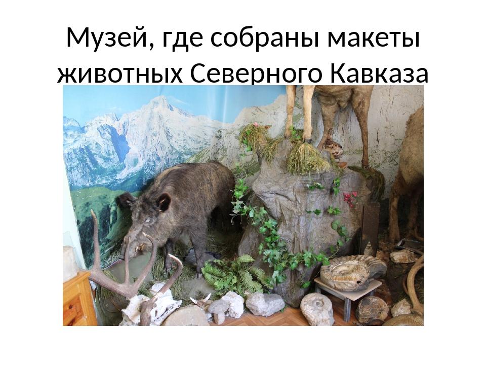 Музей, где собраны макеты животных Северного Кавказа