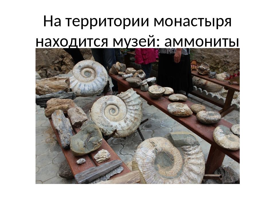 На территории монастыря находится музей: аммониты