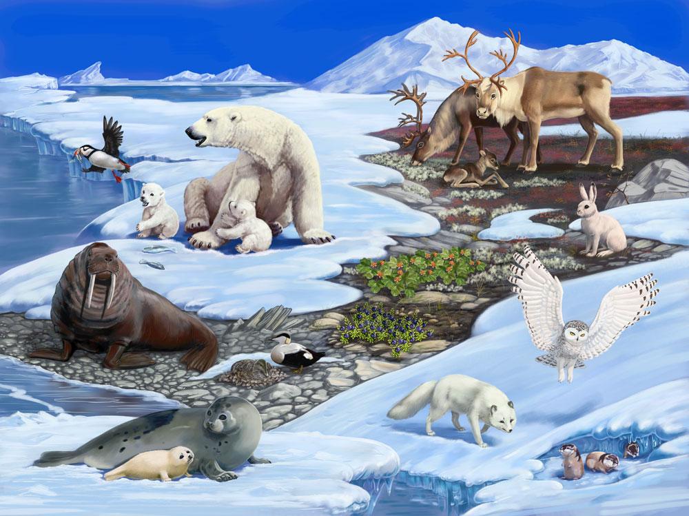 благодаря картинка животные арктики и антарктики сочинской гальке
