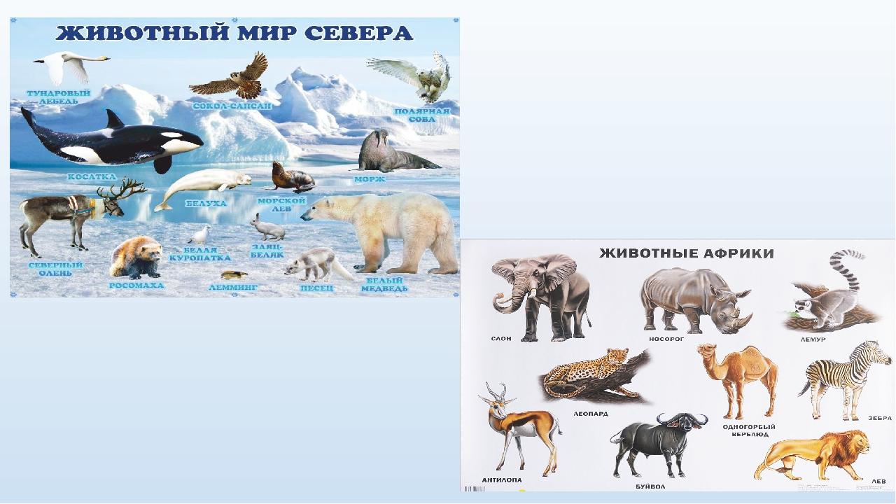 картинки животные севера и животные жарких страница офисе открыты окна