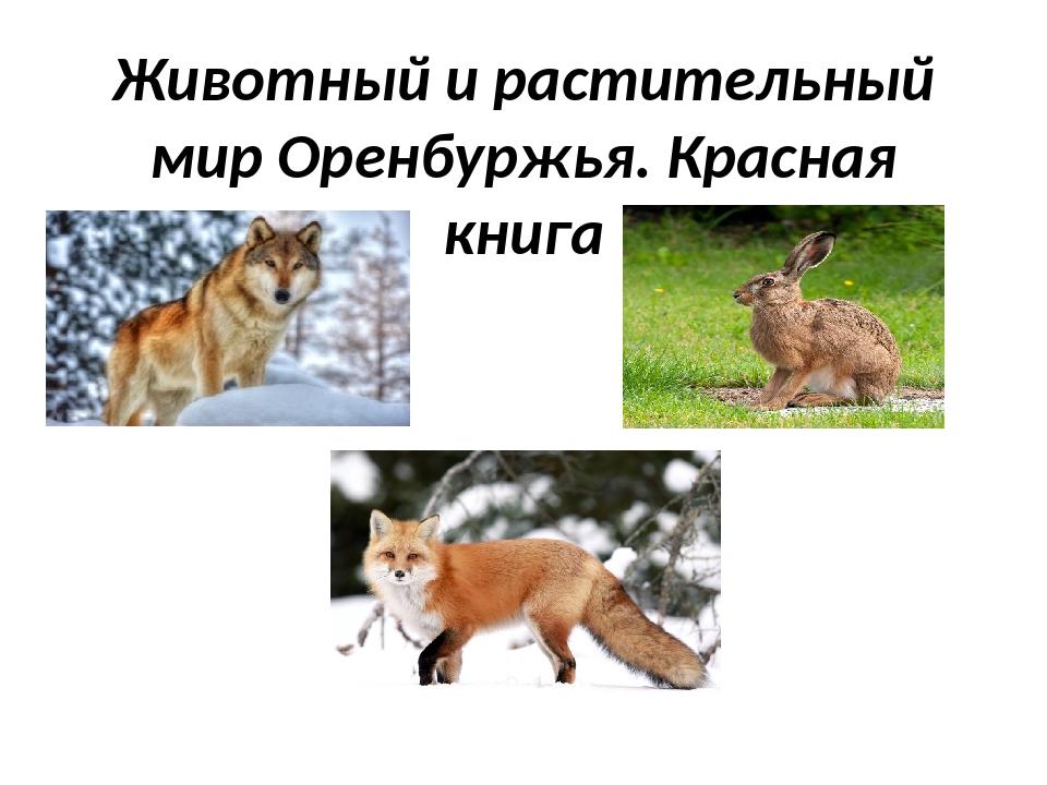 Животный и растительный мир Оренбуржья. Красная книга