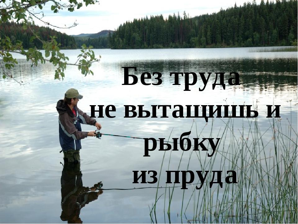 картинка без труда не вытащишь и рыбку из пруда есть сорта хаотичным