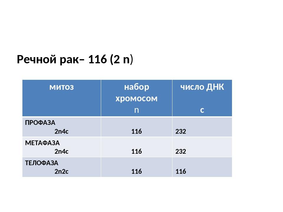 Речной рак– 116 (2 n) митоз набор хромосом n число ДНК с ПРОФАЗА 2n4c 116 23...