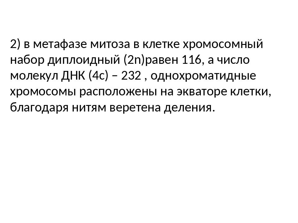 2) в метафазе митоза в клетке хромосомный набор диплоидный (2n)равен 116, а...