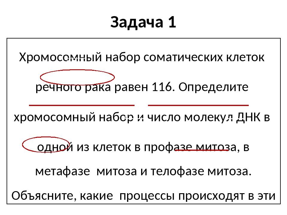 Задача 1 Хромосомный набор соматических клеток речного рака равен 116. Опреде...