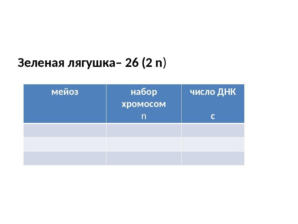Зеленая лягушка– 26 (2 n) мейоз набор хромосом n число ДНК с