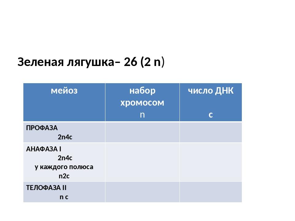 Зеленая лягушка– 26 (2 n) мейоз набор хромосом n число ДНК с ПРОФАЗА 2n4c АН...
