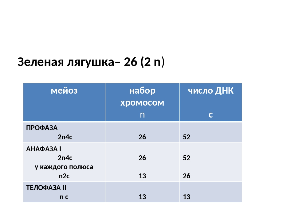 Зеленая лягушка– 26 (2 n) мейоз набор хромосом n число ДНК с ПРОФАЗА 2n4c 26...