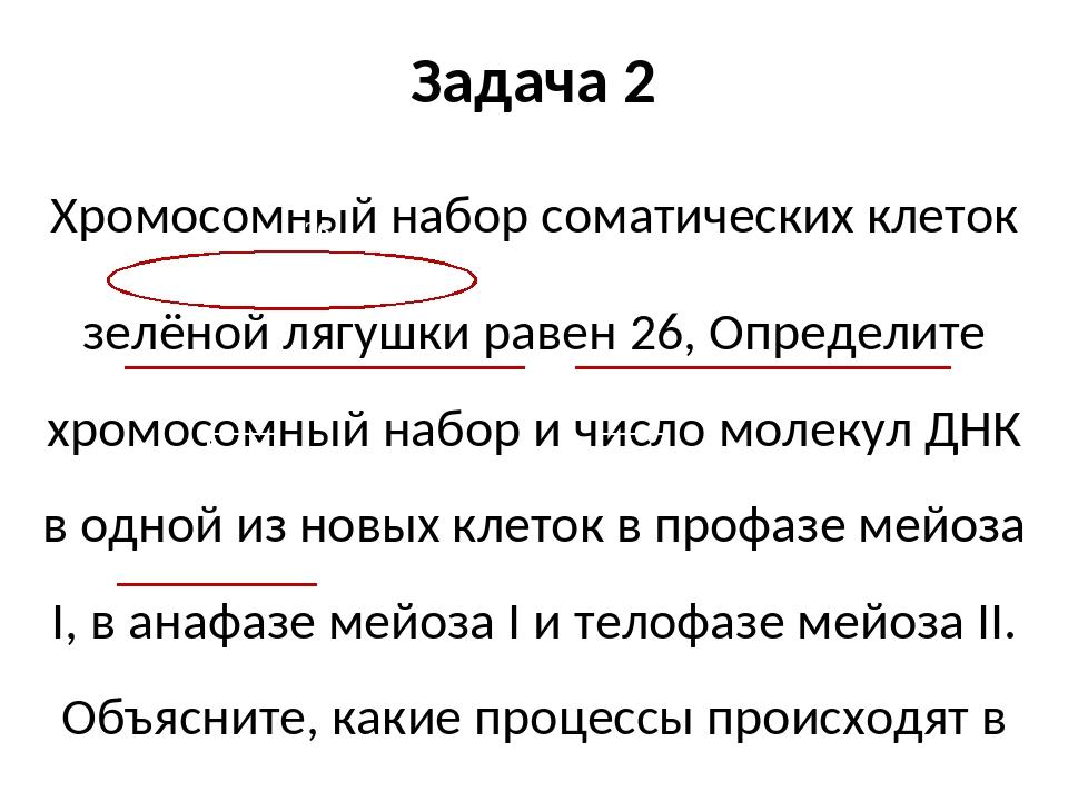 Задача 2 Хромосомный набор соматических клеток зелёной лягушки равен 26, Опре...