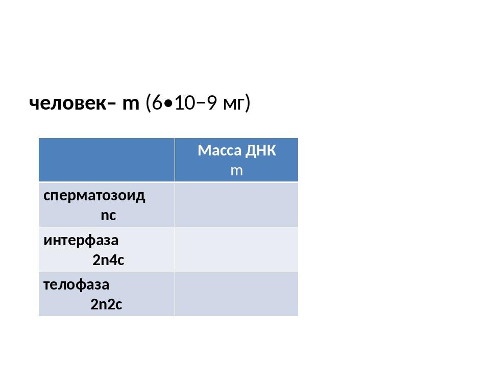 человек– m (6•10−9 мг) Масса ДНК m сперматозоид nc интерфаза 2n4c телофаза 2...