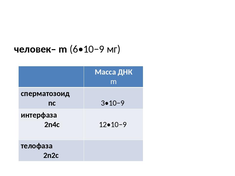 человек– m (6•10−9 мг) Масса ДНК m сперматозоид nc 3•10−9 интерфаза 2n4c 12•...