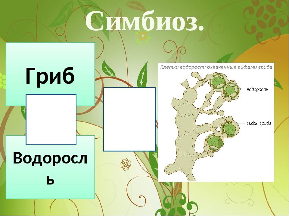 Симбиоз. 1. Гриб Водоросль