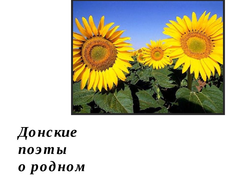 Донские поэты о родном крае