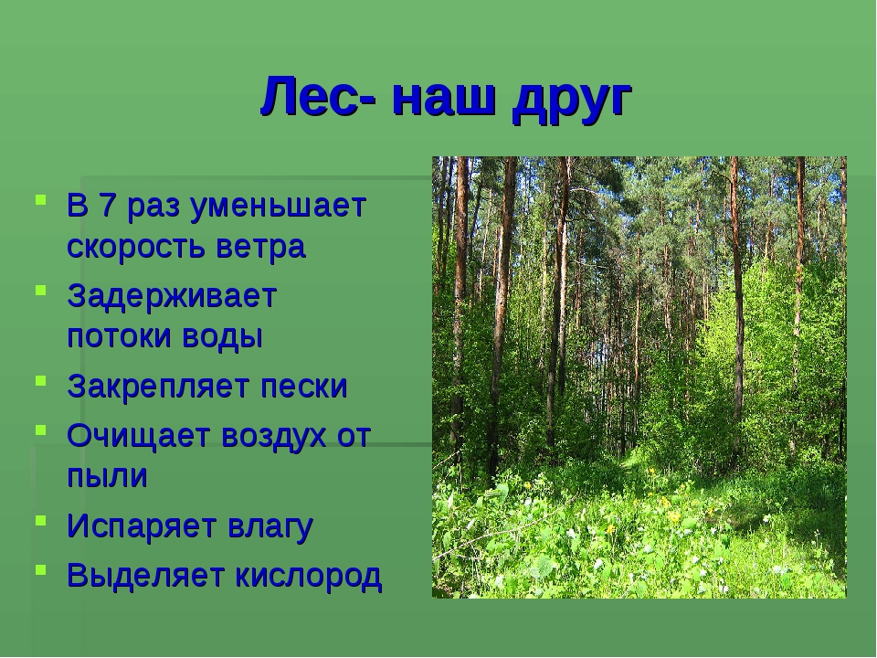 Лес- наш друг В 7 раз уменьшает скорость ветра Задерживает потоки воды Закреп...