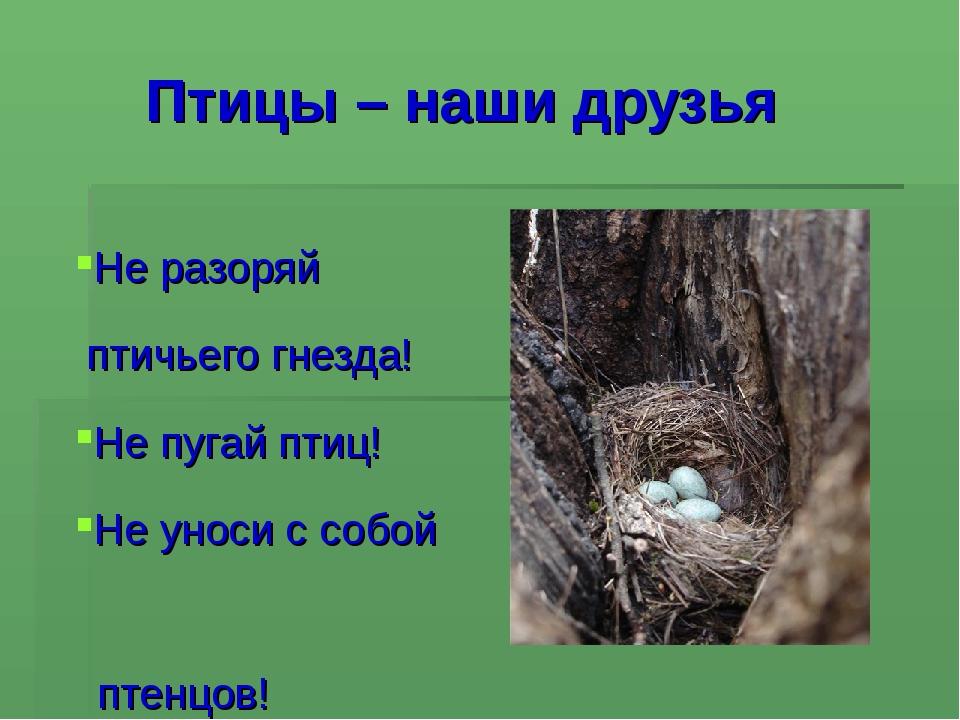 Птицы – наши друзья Не разоряй птичьего гнезда! Не пугай птиц! Не уноси с соб...