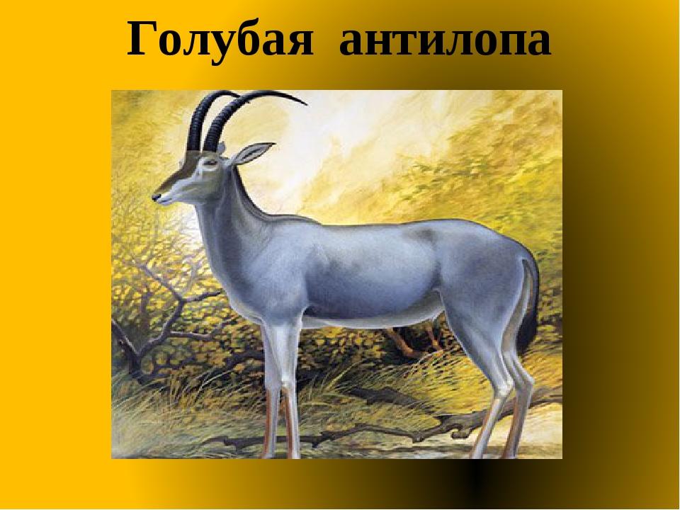 Голубая антилопа