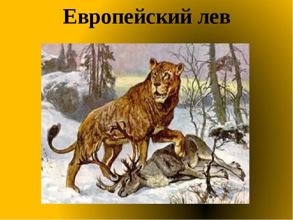 Европейский лев