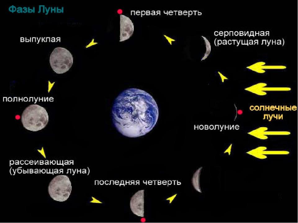 наполнится ваш фазы луны по дням картинка арт фото рад